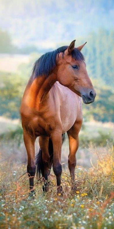 DETEXPOL Osuška Kôň na lúke  Bavlna - Froté, 70/140 cm