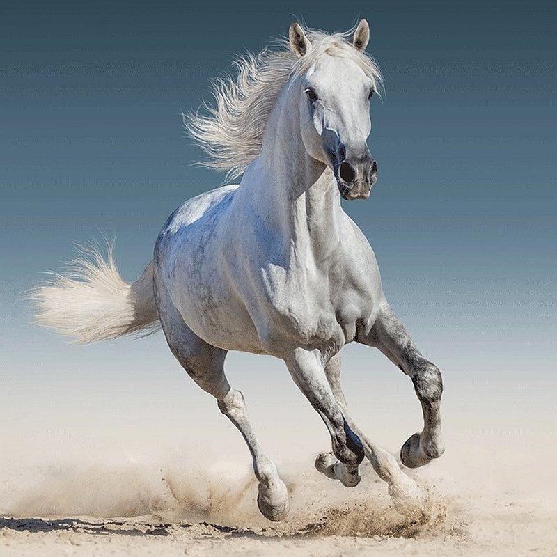 Obliečka na vankúšik White horse 40/40