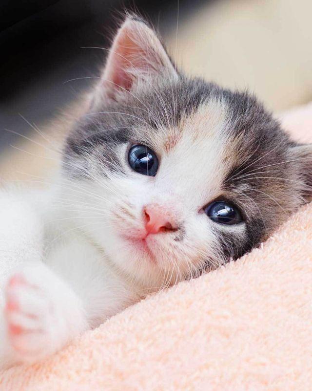 Deka mikroflanel digitálna tlač Kitten 120/150